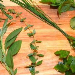 Sage, Lavender, Chives, Basil, Parsley, Oregano